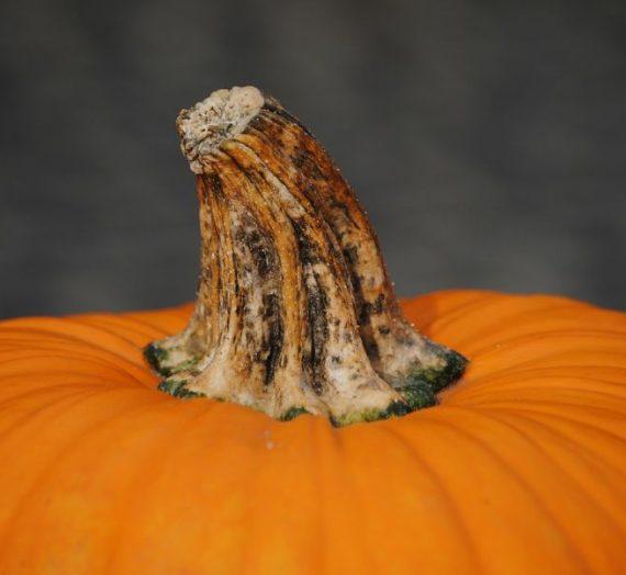 Pikantiška moliūgų sriuba su persikais
