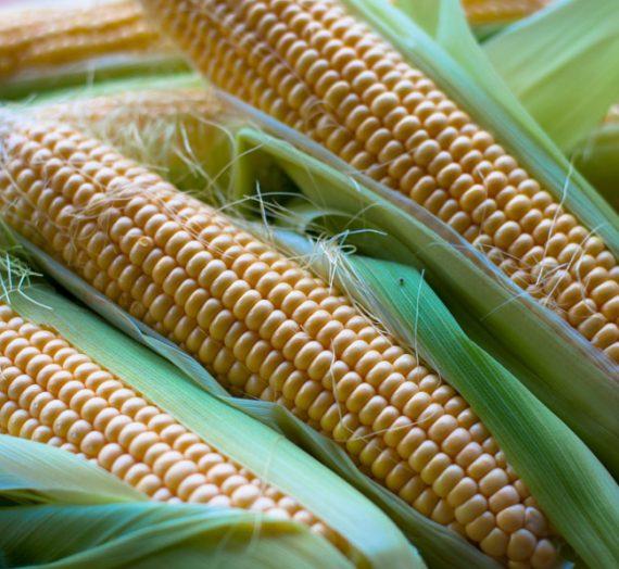 Šviežių kukurūzų sriuba