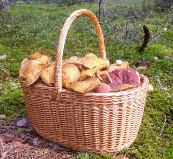 Kreminė miško grybų sriuba