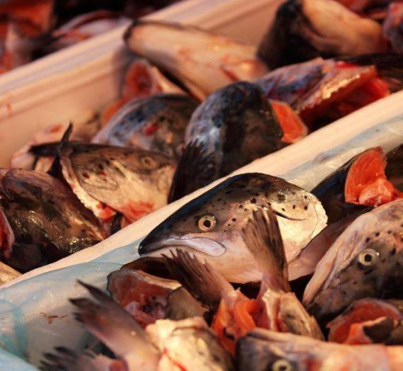 Japoniškas žuvies sultinys