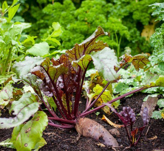 Rudens daržo daržovių sriuba